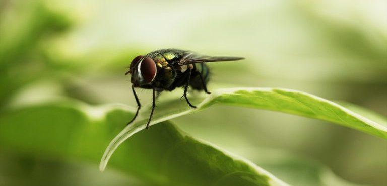 تقرير عن الامراض التي ينقلها الذباب